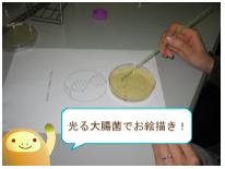 光る大腸菌でお絵描き